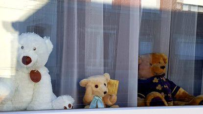 Wandelende kinderen kunnen beren spotten in het Hageland