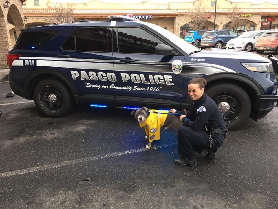 Na zijn beëdiging als politiehond werd Eddie rondgereden door Pasco
