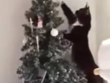 Hoe voorkom je dat je kat de kerstboom aanvalt?
