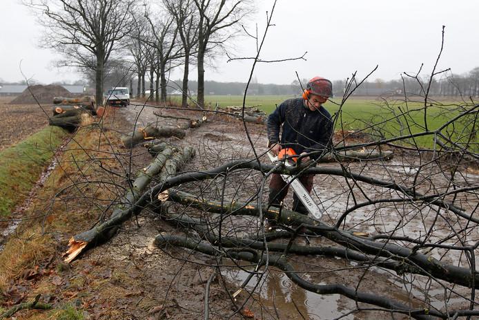 In 2013 werden zieke eikenbomen aan de Kloosterlaan in Sterksel geveld. De bermen waren vervuild met zinkassen.