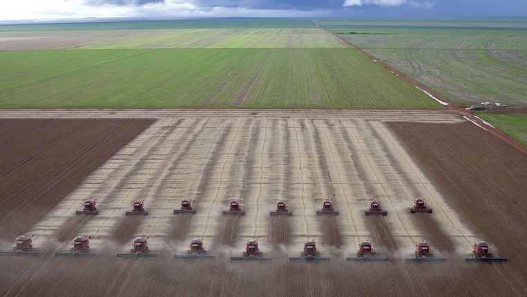 Boeren verbouwen soya in Brazilië. Beeld AP