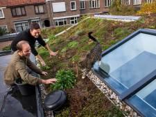 Subsidie ook voor groene daken op appartementen