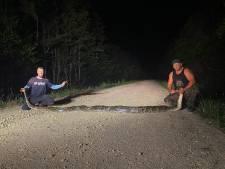 Un python de presque six mètres de long capturé en Floride