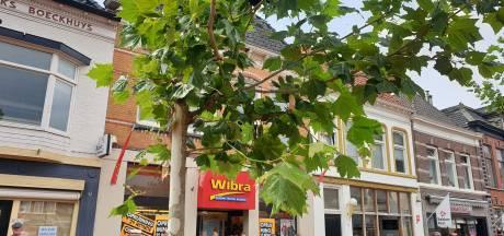 Bijenzwerm zoekt nieuw onderkomen op markt Steenwijk