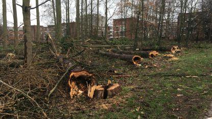 Complete ravage in Wielewaalparkje