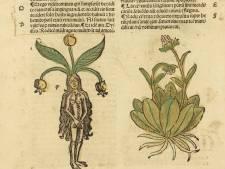 Museum Krona toont 'Groene Middeleeuwen' met Udens Wonderkruis en snufje Harry Potter