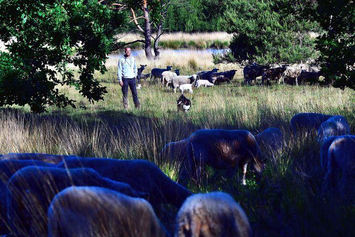 Roosendaler Peter van Eekelen is al 12 jaar schapenherder.