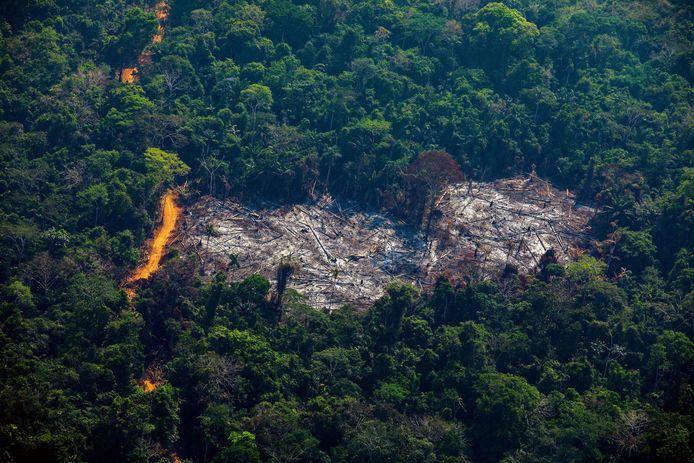 Ontbossing van het Amazonewoud in Brazilië.