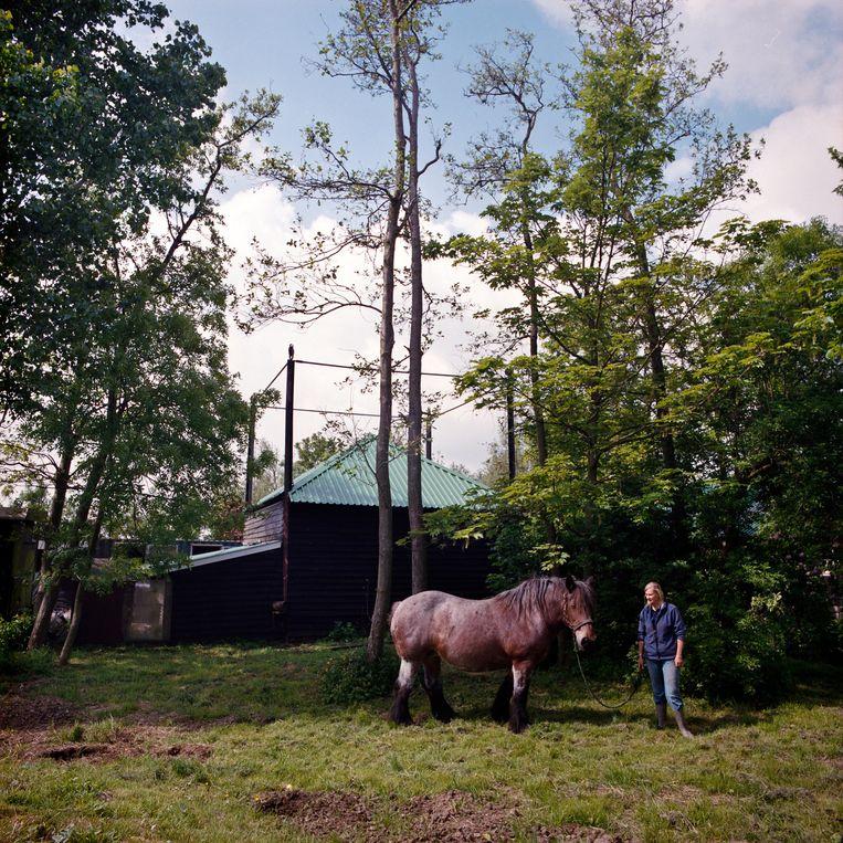 We hadden altijd al paarden op het land. Toen mijn vader overleed, bouwde ik de veehouderij om tot pensionstal en fokkerij' Beeld Loek Buter