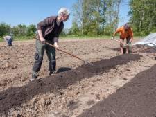 Tuinderij Plantalia: zelf oogsten en plukken