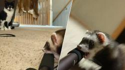 Kijk hoe een kleine fret een hele selfiestick mét camera steelt