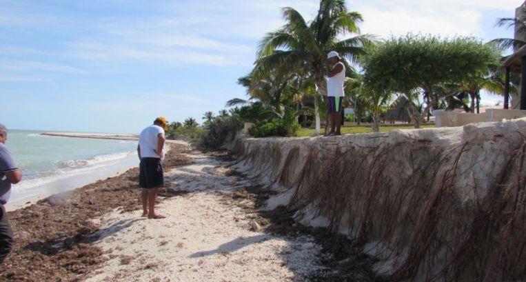 Langs kusten van het Mexicaanse schiereiland Yucatan vergeleken ze stranden met en zonder vegetatie. Conclusie: hoe meer zeegras, hoe minder erosie. Beeld null