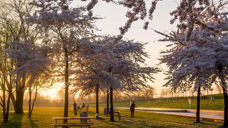 Genieten van de lente bij de Westergasfabriek Beeld Arjen Veldt