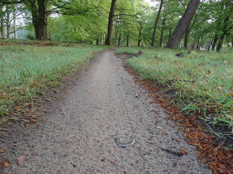 Een doodgereden hazelworm, afgelopen week, op het  mountainbikepad op landgoed De Sprengenberg  van Natuurmonumenten. Beeld Anton van Beek