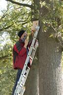 Joey Kwaks werkt bij zorgboerderij de Molenhoek. Hij hangt de nestkasten op in de Molenhoek in Middelrode.
