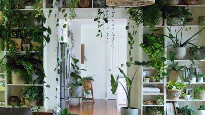 huis en interieur | HLN