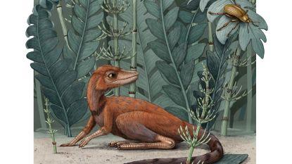 Piepkleine voorouder van de dinosaurus teruggevonden in Madagaskar