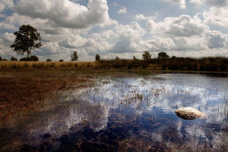 Het Dwingelderveld op voormalig agrarisch landbouw gebied, aangekocht door Natuurmonumenten. Beeld Hollandse Hoogte / Reyer Boxem