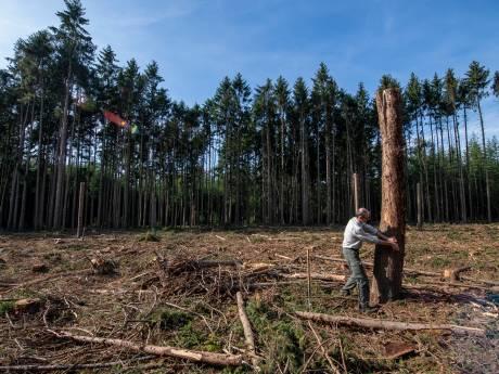 Kaalslag door 'letterzetter' in boswachterijen Hardenberg, Ommen en Staphorst; kap van zieke fijnsparren enige oplossing