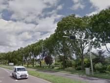 '335 bomen langs N489 zijn niet te oud, niet ziek en zorgen niet voor overlast'
