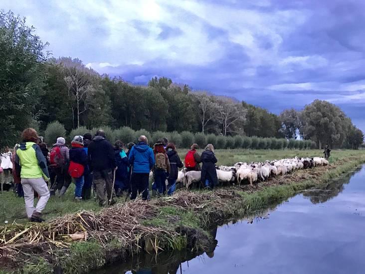 Hartje Breda: Heleen wil graag door met de schapen