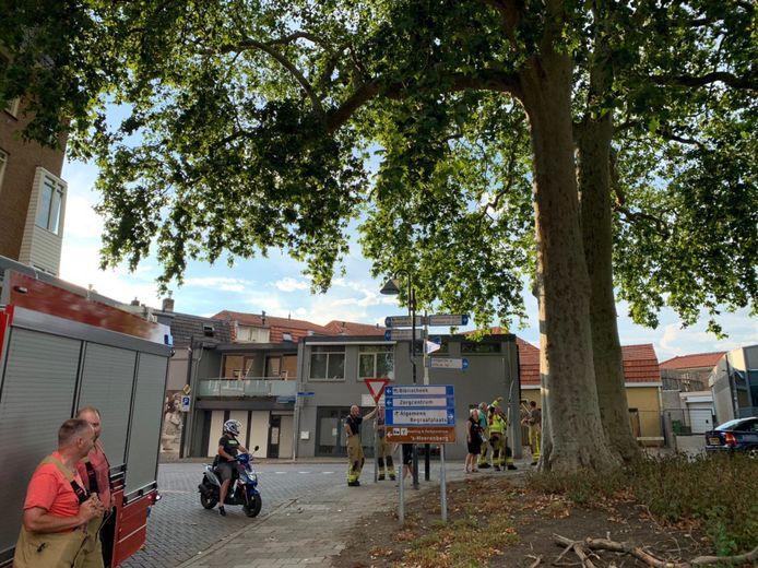 De brandweer zaagt de andere dode takken uit de monumentale plataan aan de Doetinchemseweg in 's-Heerenberg.