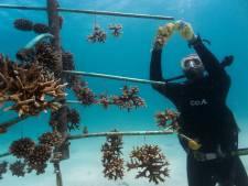 Oosterbeker wil het Afrikaanse koraal redden: 'Door overbevissing gaat steeds meer verloren'