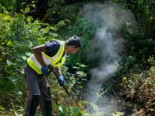 Rheden bindt de strijd aan met acht hectare Japanse duizendknoop