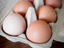 Gelderse fracties in bres voor eierbedrijven