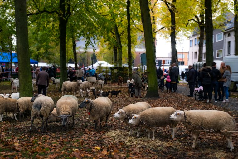 De dieren op het Sint-Hubertusplein.