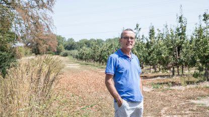 Fruitboer dumpt besmette bomen vlak bij plantage collega