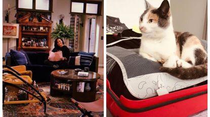 SHOWBITS. Demi Lovato heeft een gastrol beet en weet jij wiens kat mee op reis wil?