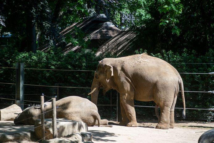 Voor de olifanten was het al bijna te warm.