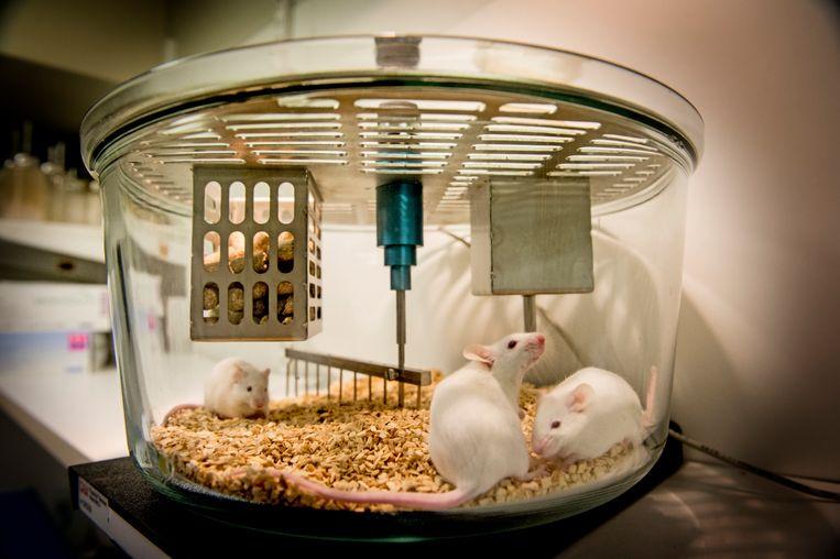 Het gebruik van muizen stijgt nog altijd jaar na jaar. 166.951 diertjes werden in 2018 ingezet.