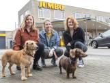 Enschedese studentes laten graag uw hond uit: 'Het is mooi om anderen te helpen'