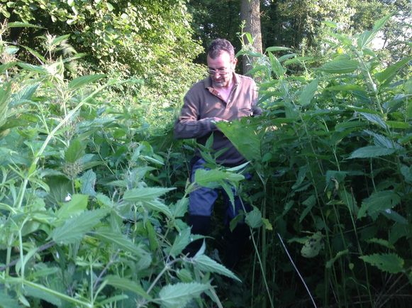 Een van de leden baant zich een weg door de struiken die het Markepad overwoekeren.