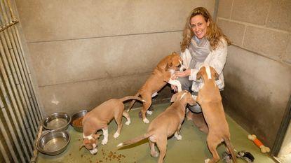 Heistse straathonden welkom in Mechelen
