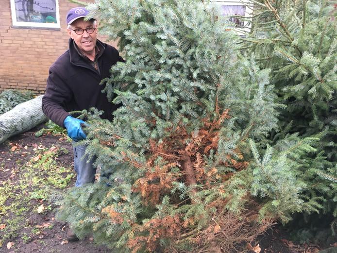 Jan Hamers in Kaatsheuvel toont de droogteschade die een deel van zijn kerstbomen trof.