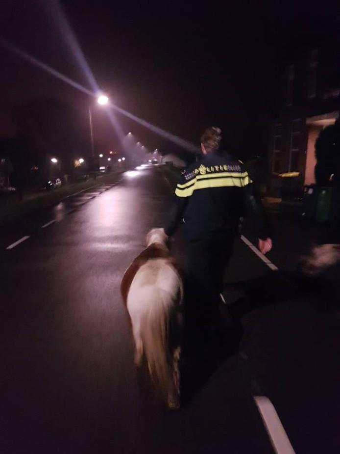 Paard en pony samen aan de wandel.