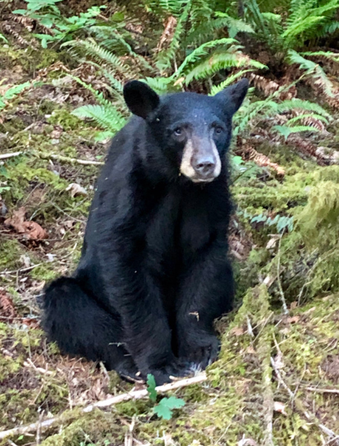 De beer die moest worden doodgeschoten.