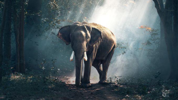 Dit zijn de 10 beste natuurfoto's volgens National Geographic