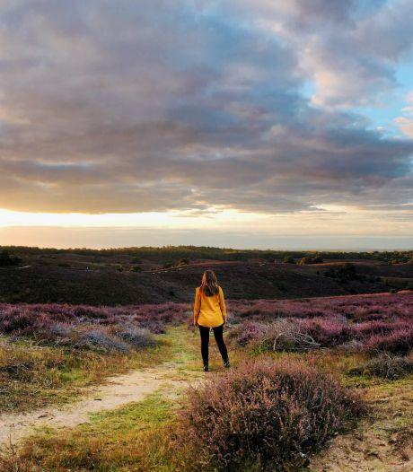 Spanning onder 'heidewolven' bij het ochtendgloren: wie maakt de mooiste Posbankfoto?