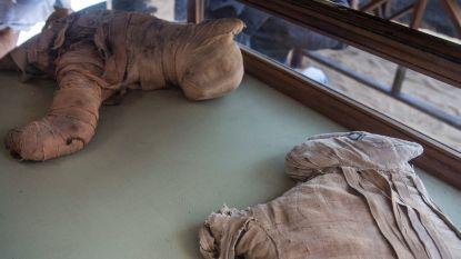 """""""Archeologen graven gemummificeerde leeuwenwelpjes op in Egypte"""""""