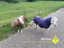 Politie haalt twee pony's van de weg bij Westervoort