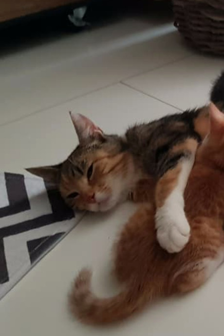 Asiel start inzameling voor kat Lientje na mishandeling met tiewrap