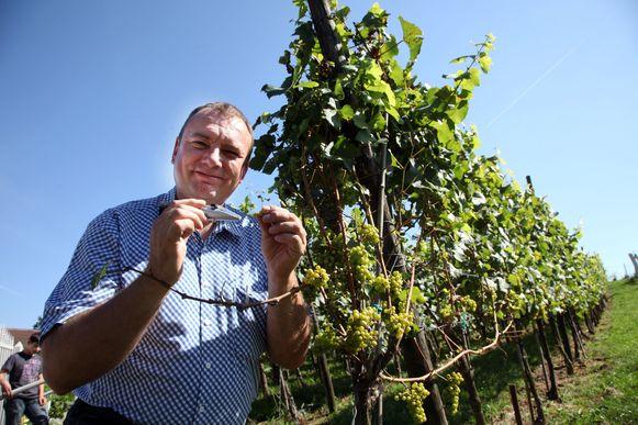 Ghislain Houben, hier op archiefbeeld, tussen zijn wijnranken.