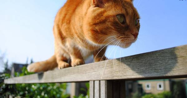 Kattenpoep in de tuin 39 neem verantwoordelijkheid voor kat for Kattenpoep in de tuin