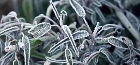 Zo help je de planten buiten de winter door