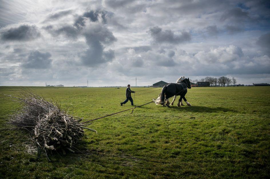 De toekomst van het Nederlandse boerenbedrijf ligt in de jaren vijftig