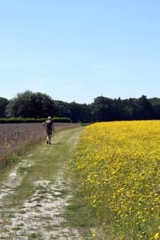 Vereniging Markdal zaait perceel in: walhalla voor vogels en bijen